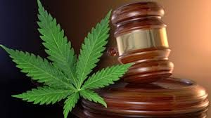 cannabis business law
