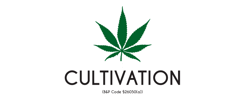 How to qualify for a cannabis cultivation license?