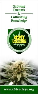 Make your business shine with 420 college
