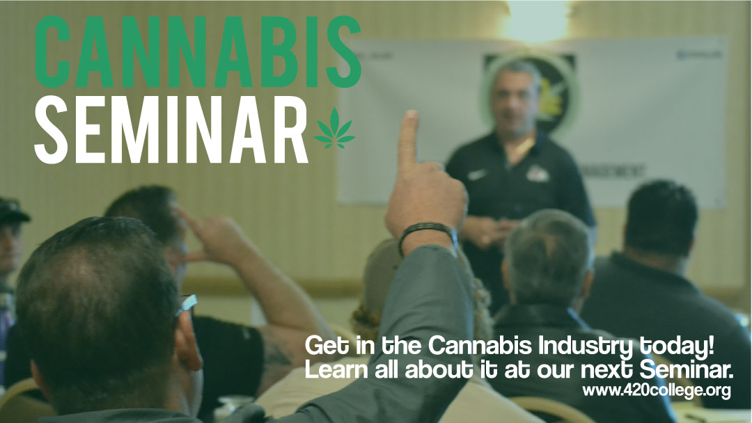 cannabis permits for business